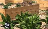 jardin-aromatique-paimboeuf-2749