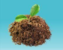 compost1-2268