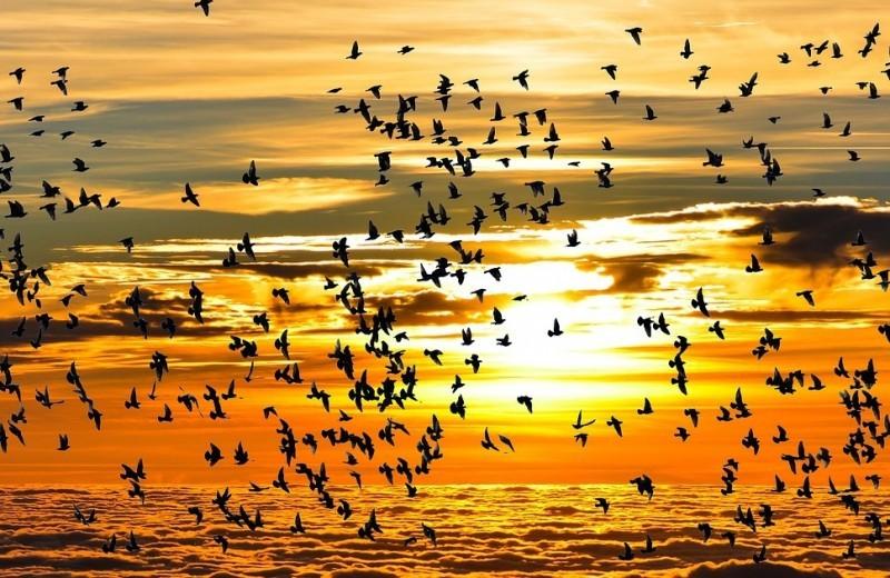oiseaux-migrateur-5782-2215