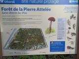 carte-sentiers-foret-pierre-attelee-stbrevin-5457
