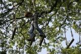 defi-nature-frossay-escal-arbre-paint-ball-jeux-enigmes-st-brevin-loire-atlantique-pays-de-retz-9-1721