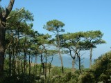 dune-boisee6-5008