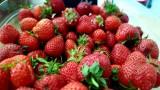 epicerie-retz-aunee-st-brevin-tourisme-fraises-4090