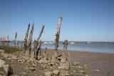 estuaire-de-la-loire-saint-brevin-sud-estuaire-paimboeuf