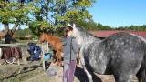 ethologie-enfant-massage-chevaux-equi-coaching-st-brevin-tourisme11-3891