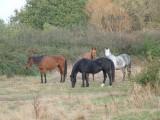 ethologie-prairie-troupeau-liberte-equi-coaching-st-brevin-tourisme14-3894