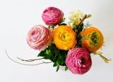 flowers-342532-1920-605