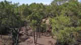 Forêt-Pierre-Attelée-Saint-Brevin-2-204