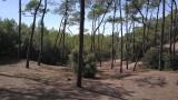 Forêt-Pierre-Attelée-Saint-Brevin-4-203