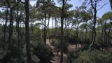 Forêt-Pierre-Attelée-Saint-Brevin-5-208