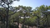 Forêt-Pierre-Attelée-Saint-Brevin-5-210