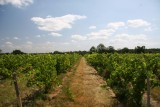vignes-frossay