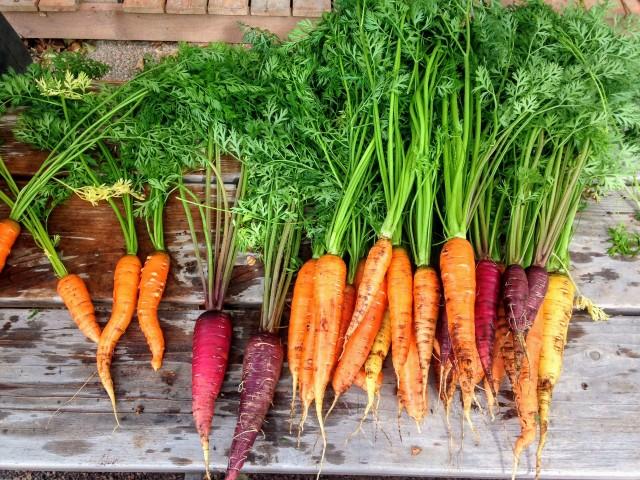 carrot-2743498-1920-2137