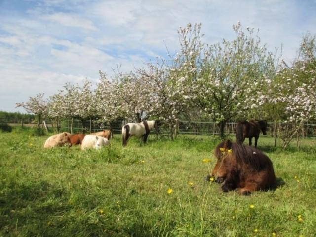 centre-equestre-chauve-2988