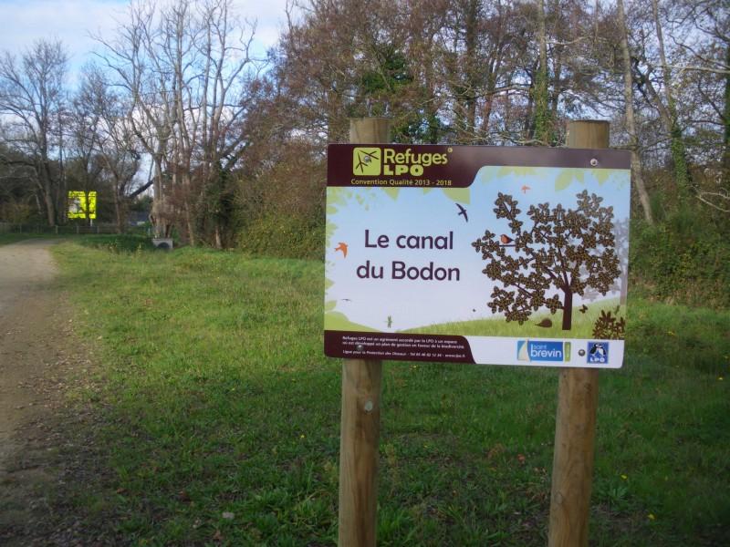 bodon-2-2510