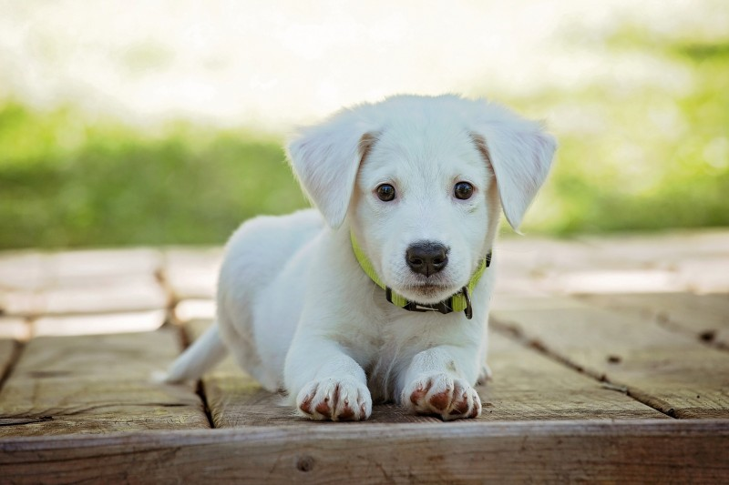 chiens-veterinaires-2460