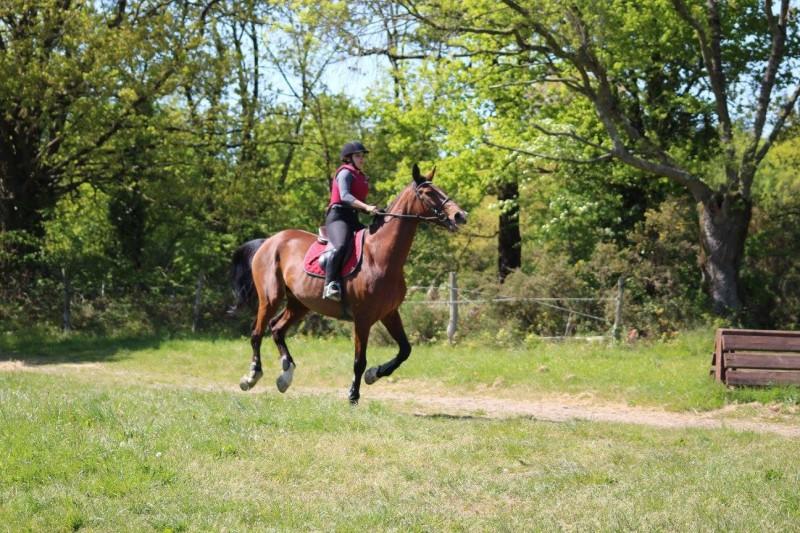 ecuries-de-saint-brevin-cheval-1-2259