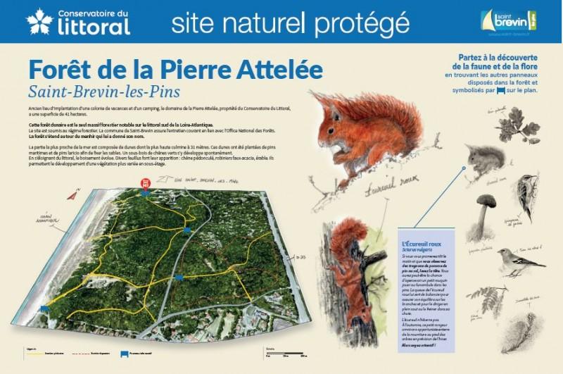 foret-de-la-pierre-attelee-site-naturel-protege-st-brevin-4772