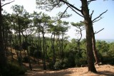 800x600-nature-foret-st-brevin4-1349-6544