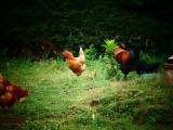 atelier-petit-fermier-ce4pattes-stpereenretz-10996