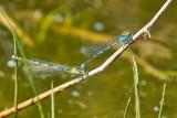 dragonfly-5179279-960-720-10992
