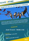 enquetons-sur-les-hirondelles-15-avril-2021-12373