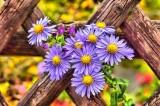 garden-3840125-960-720-13507