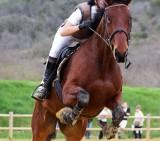 horse-3095667-960-720-1596