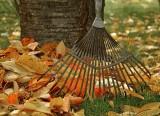 jardin-automne-frossay-13527