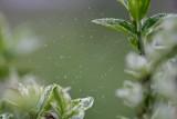 jardin-creatif-quai-vert-frossay-st-brevin-575
