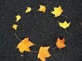leaves-landart-frossay-13526