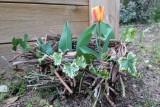 nid-avec-tulipe-a-12333