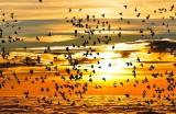 oiseaux-migrateurs-1255
