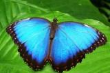 papillon-st-brevin-tourisme-6422