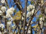 quel-est-donc-cet-oiseau-association-hirondelle-13206