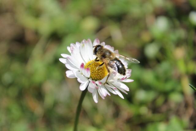 chantier-participatif-des-fleurs-pour-les-abeilles-preview-1198