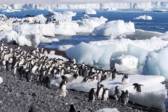 connaissance-du-monde-antartique-cinejade-saint-brevin-13636