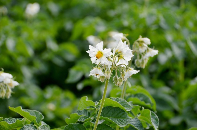 fleur-11089