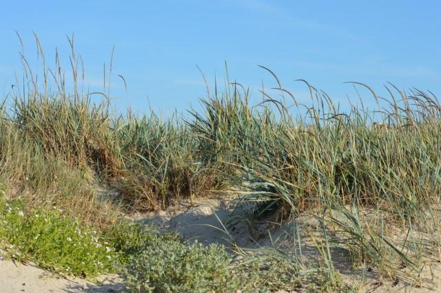la-dune-entre-terre-et-mer-3252