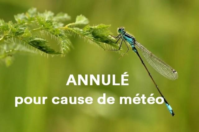 libellule-nature-saint-brevin-annule-12945