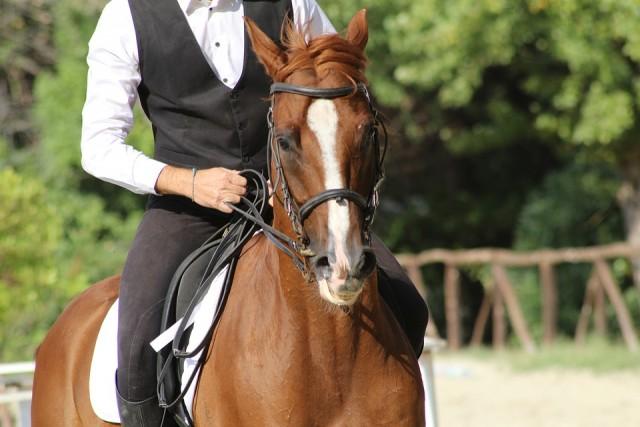 rando-equestre-2828