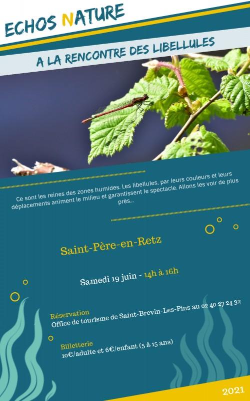 a-la-rencontre-des-libellules-ot-19juin2021-12374