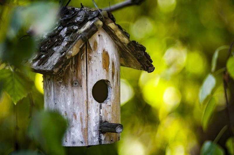 bird-feeder-1815656-960-720-13511