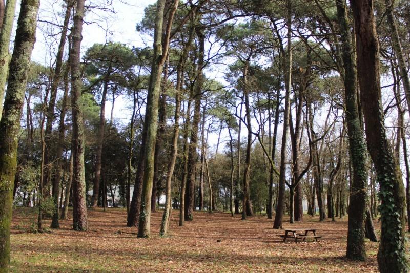 bois-des-soucis-st-brevin-tourisme1-6070