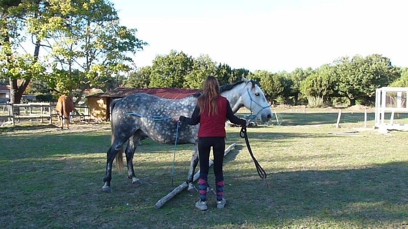 ethologie-adolescent-deplacement-lateral-equi-coaching-st-brevin-tourisme2-6561