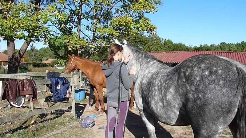 ethologie-enfant-massage-chevaux-equi-coaching-st-brevin-tourisme11-6568