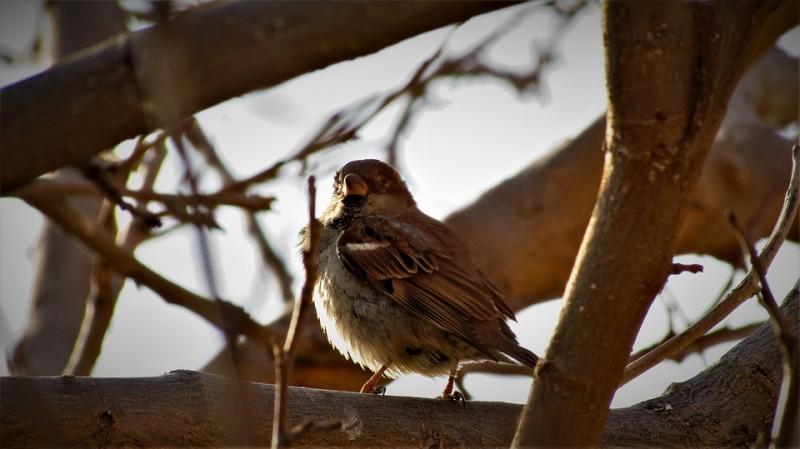 oiseau-pixabay-sortie-nature-999