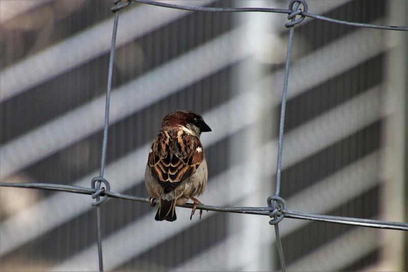 oiseau-ville-12756