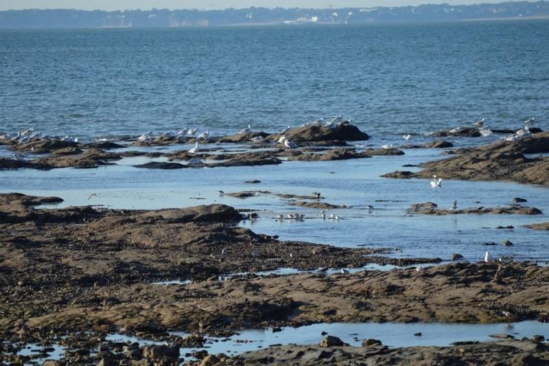oiseaux-mer-10159