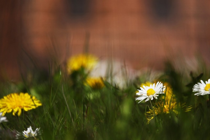 spring-meadow-4154398-960-720-10632